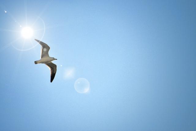 空に羽ばたく鳥