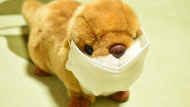 マスクをしている犬のぬいぐるみ