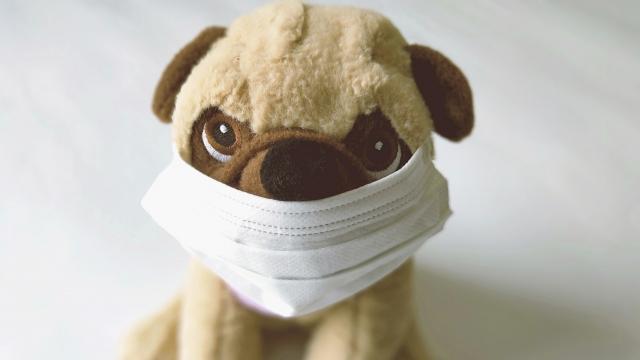 マスクをつけた犬のぬいぐるみ